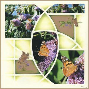 ButterfliesFloscrap95